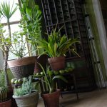 Breathe Easier This Year – 5 Affordable Ways to Improve Indoor Air Quality