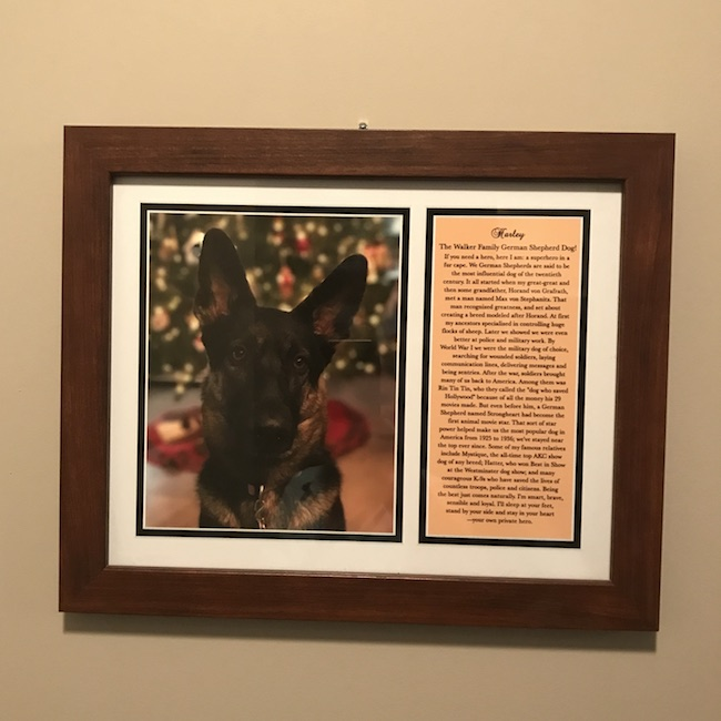 Create your customized Fido Phile photo of your four legged family member, you have a beautiful framed tribute you can display proudly for everyone to see!
