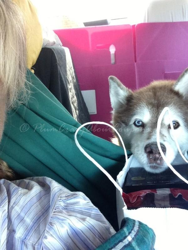 backseat dog fence