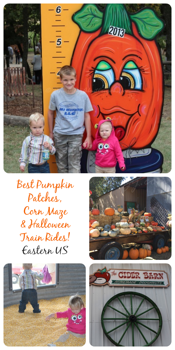 316f4a0f870 Here is a list of some of the best pumpkin patches