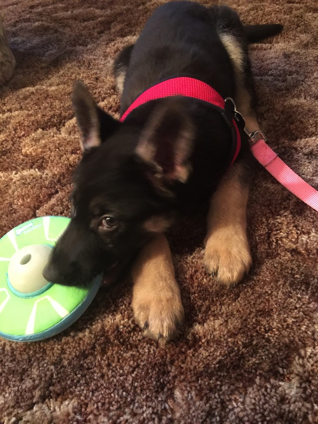 Chuckit LIGHTPLAY is designed to encourage play after the sun goes down, when most people are home from work and have time to play with their pup.
