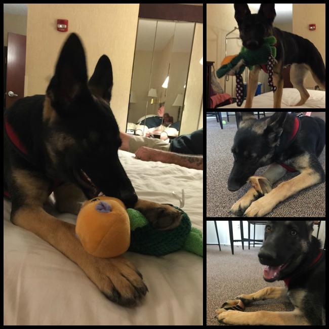 pet toys and treats 4