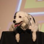 Stunt Dog Experience ~ Branson, MO #ExploreBranson