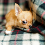 Your Guide To Preparing Your Home For A New Puppy