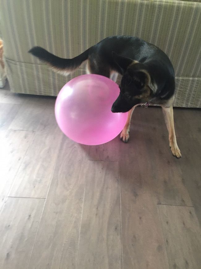 """I have seen the Super Wubble Ball on TV and always wondered to myself """"does that really work?"""" So, I was all excited and couldn't wait to give it a try."""