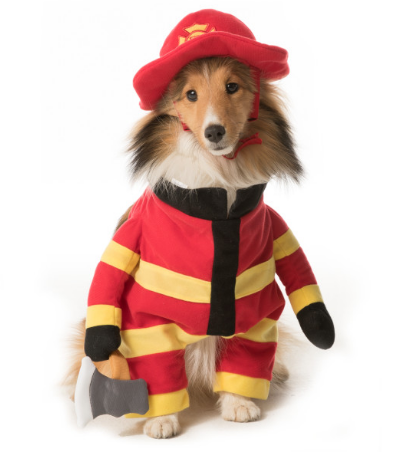 Here is a list of the 10 cutest Halloween Dog Costumes (in my opinion) that you can still get in plenty of time for Halloween. Some are just too cute!