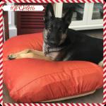 B&G MARTIN MICROSUEDE DOG BED CUSHION #JPCHGG16 #JustPlumCrazy @BandGMartin