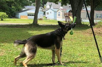 If your dog likes to pull, tug, play ball, fetch or anything else, they will love the Tether Tug. It's available in small, medium or large.